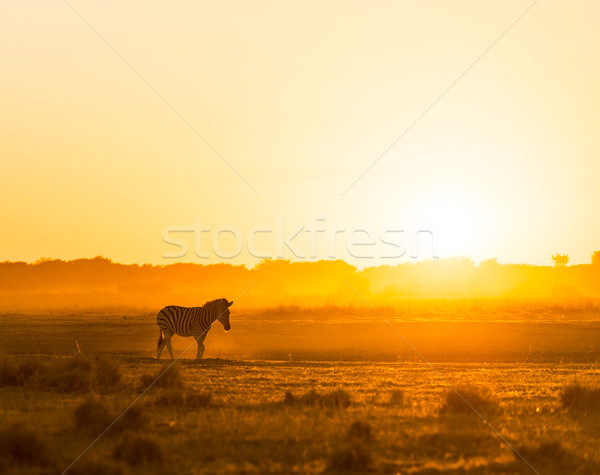 Африка закат пейзаж зебры пыли Ботсвана Сток-фото © THP