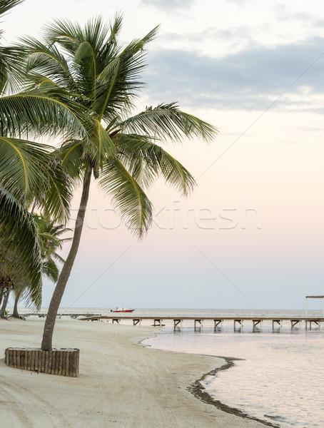 Spiaggia tropicale solitudine cielo acqua Palm Ocean Foto d'archivio © THP