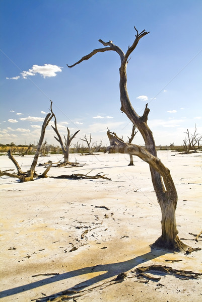Climate Change Stock photo © THP