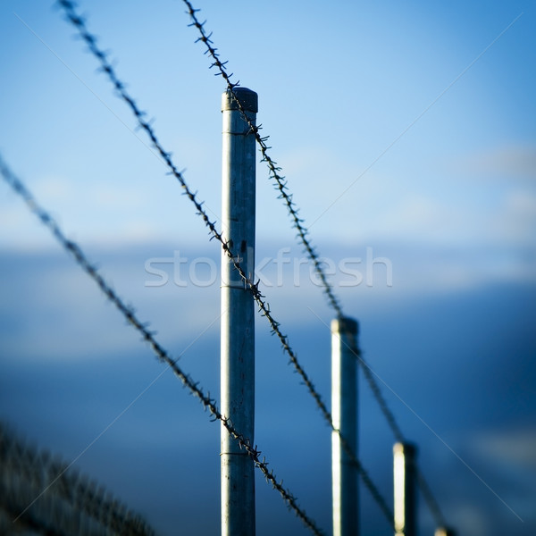 Barbed Wire Fence Stock photo © THP