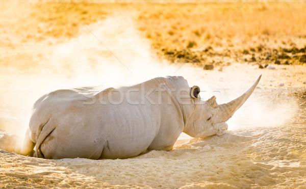 Beyaz gergedan gergedan safari Botsvana Afrika Stok fotoğraf © THP