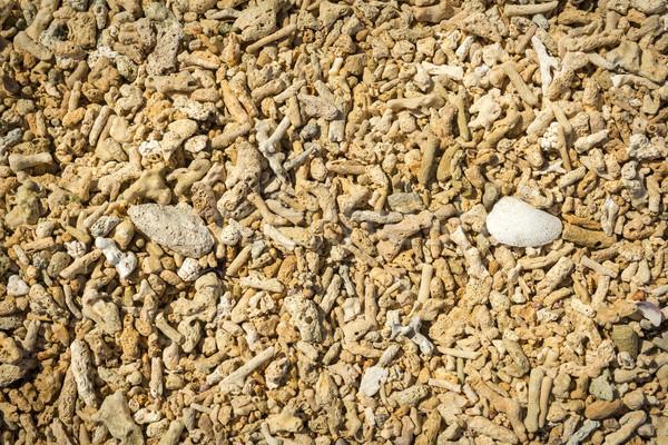 ölü mercan kabukları plaj arka plan yaz Stok fotoğraf © THP