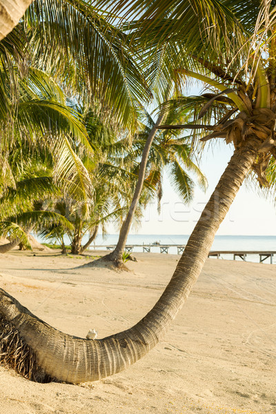 Tropical Beach Palmtree Stock photo © THP