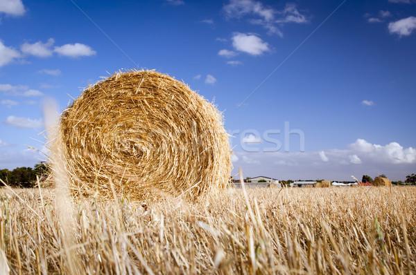 Сток-фото: сено · полях · лет · время · урожай · закат