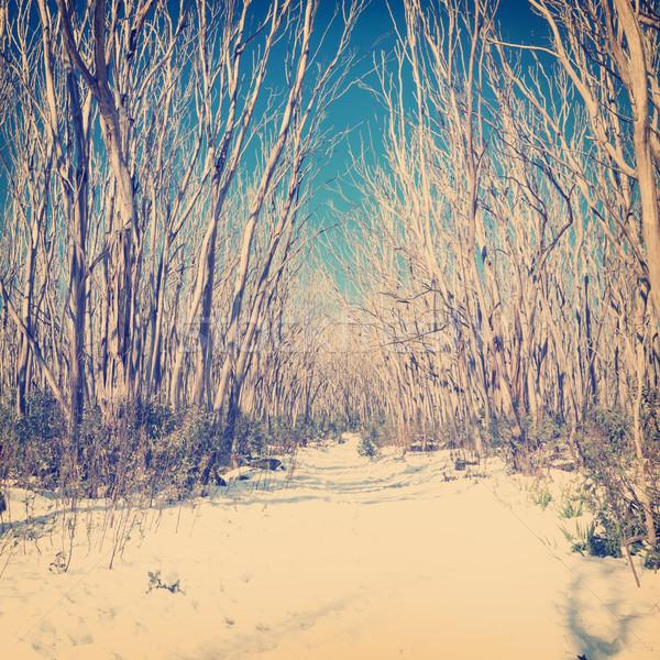 Retro Snow Trees Stock photo © THP