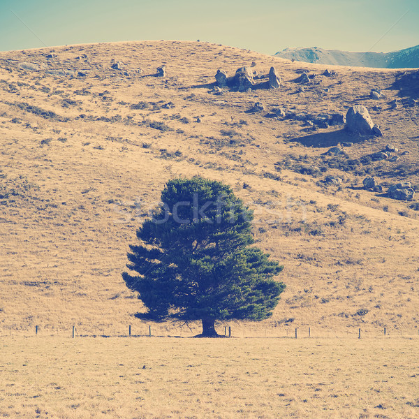 Lone Tree Stock photo © THP