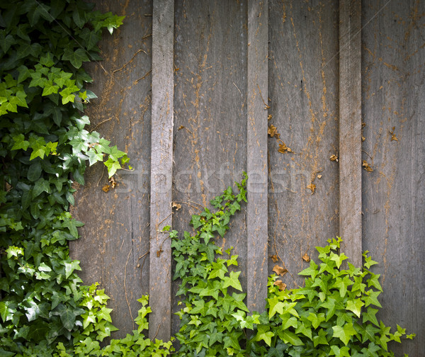 Ivy Wall Frame Stock photo © THP