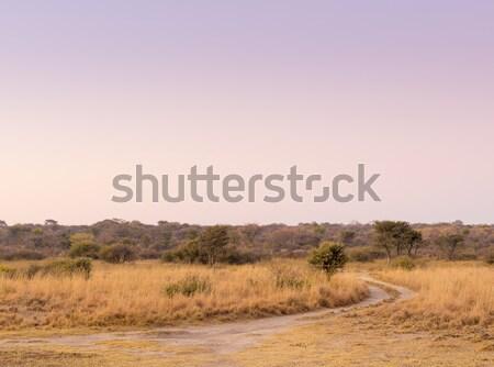 日の出 アフリカ 平野 風景 風光明媚な ボツワナ ストックフォト © THP
