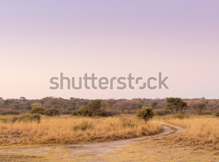 Sunrise on African Plains Stock photo © THP