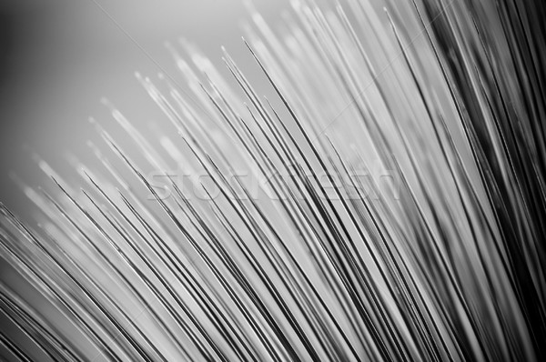 Grass Tree Details Stock photo © THP