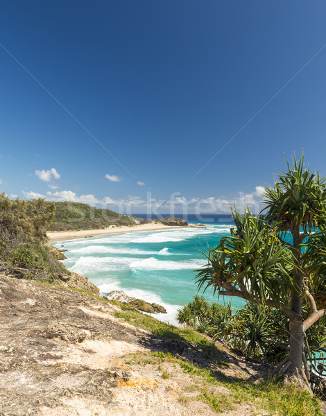 Queensland palmiers plage ciel eau Photo stock © THP