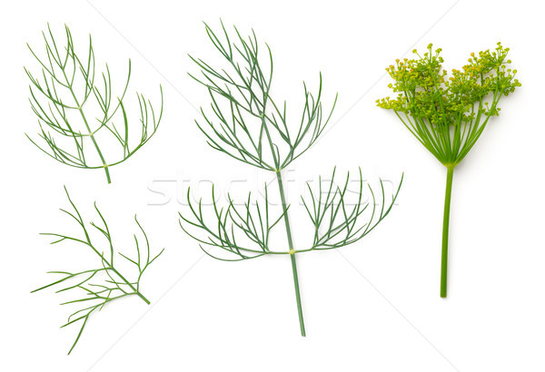 Dill Isolated on White Background  Stock photo © ThreeArt