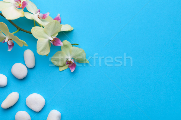 Orchid Flowers with Spa Stones on Blue Background Stock photo © ThreeArt