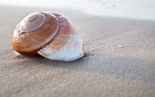 Yaz plaj deniz gün batımı okyanus Stok fotoğraf © ThreeArt