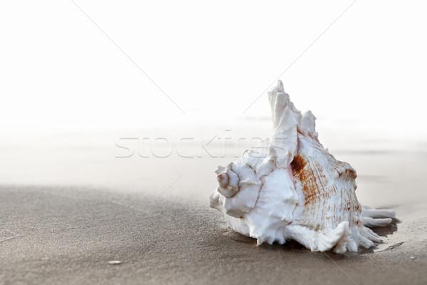 Egzotik gündoğumu plaj gün batımı Stok fotoğraf © ThreeArt
