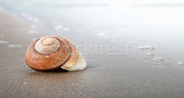 Spirale shell plage de sable mer panoramique Photo stock © ThreeArt