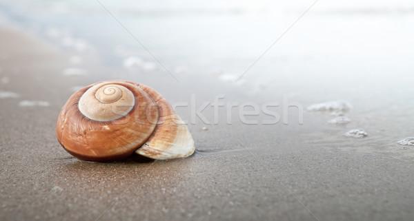 Spirál kagyló kagyló homokos tengerpart tenger panorámakép Stock fotó © ThreeArt