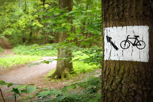 Estrada parque bicicleta caminho assinar árvore Foto stock © ThreeArt