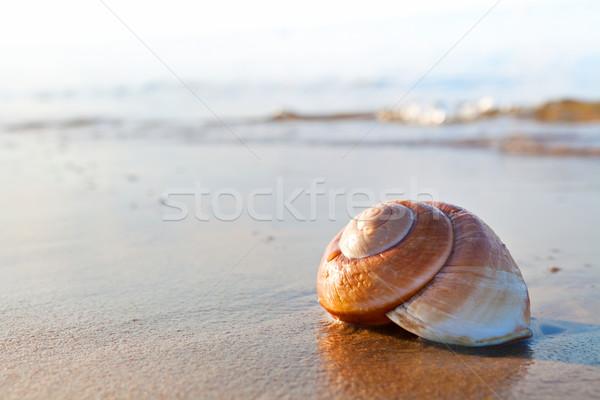 Yaz plaj deniz doğa gün batımı Stok fotoğraf © ThreeArt