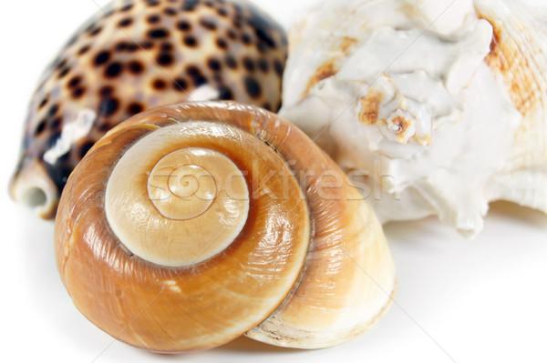 Three Sea Shells Stock photo © ThreeArt