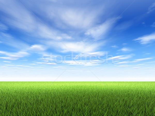 Gras hemel veld vers groen gras blauwe hemel Stockfoto © ThreeArt