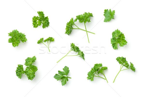 листьев петрушка изолированный белый Top мнение Сток-фото © ThreeArt
