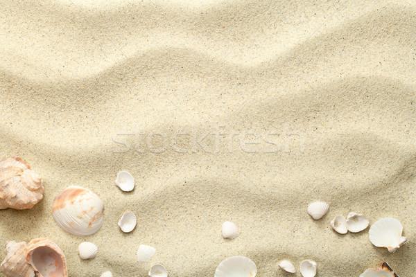 Zand schelpen strand textuur exemplaar ruimte top Stockfoto © ThreeArt