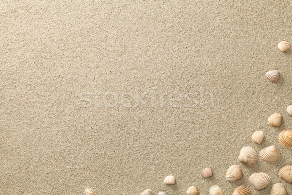 Sandy Beach Background with Shells Stock photo © ThreeArt