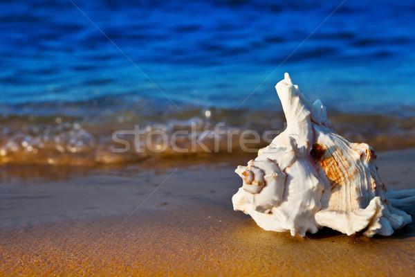 Yaz plaj deniz gün batımı arka plan Stok fotoğraf © ThreeArt