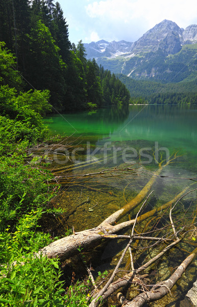 italian alps tovel lake Stock photo © tiero