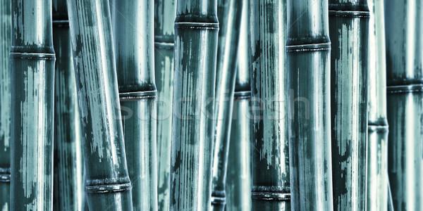 Szeroki bambusa obraz inny charakter drzewo Zdjęcia stock © tiero