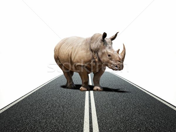 rhino way Stock photo © tiero