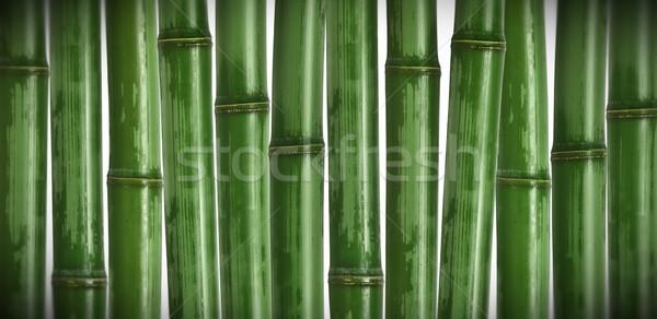 Bambù immagine diverso natura albero primavera Foto d'archivio © tiero