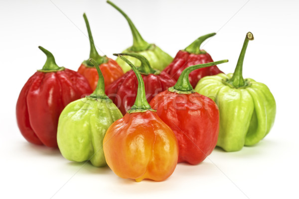 chilly pepper collection background Stock photo © tiero