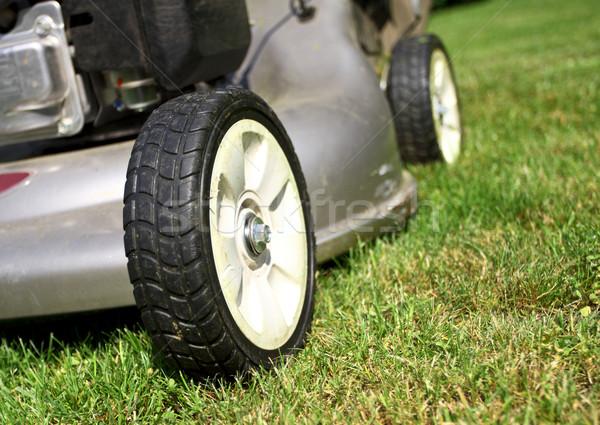 Szczegół klasyczny zielona trawa trawy pracy Zdjęcia stock © tiero