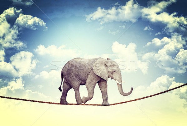 elephant on rope Stock photo © tiero