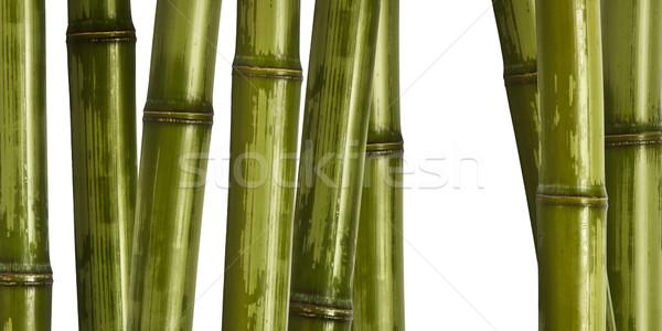 Ampia bambù immagine diverso natura albero Foto d'archivio © tiero