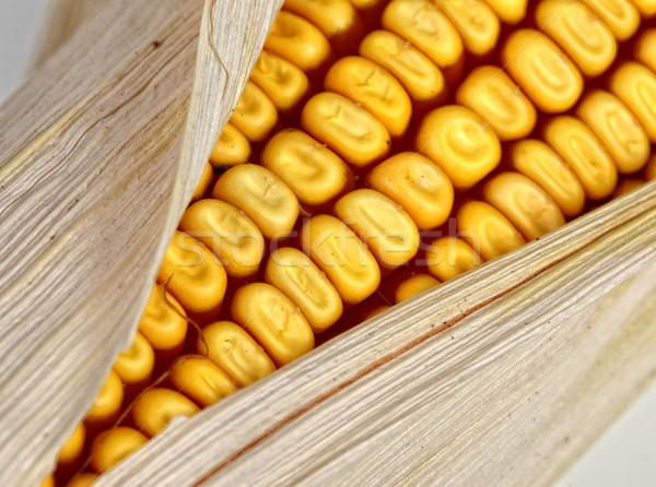 corncob detail Stock photo © tiero