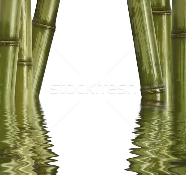 Bambù isolato bianco primo piano immagine verde Foto d'archivio © tiero