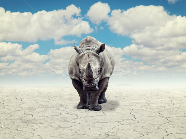 rhino in a desert Stock photo © tiero