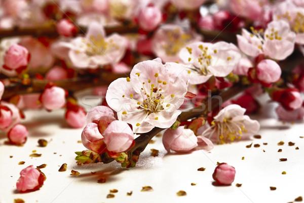 Virág cseresznye virág közelkép kép virágok Stock fotó © tiero