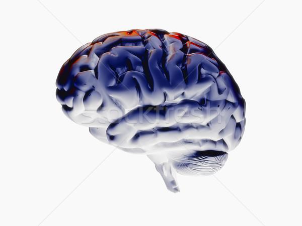 Cervello 3D modello bianco energia Foto d'archivio © tiero