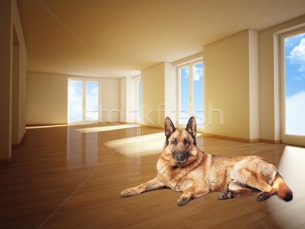 german sheperd on wood floor Stock photo © tiero