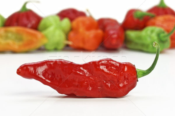 red hot chilly pepper Stock photo © tiero