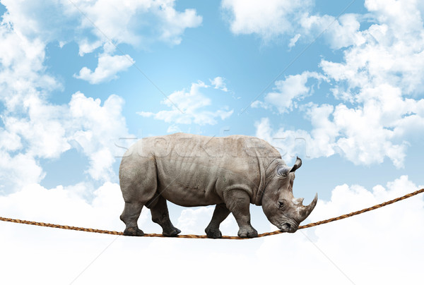 acrobat rhino Stock photo © tiero