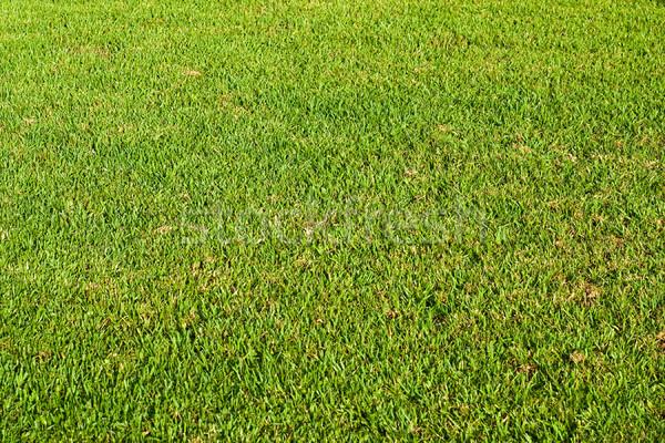 çim yaz yeşil renk bitki Stok fotoğraf © timbrk