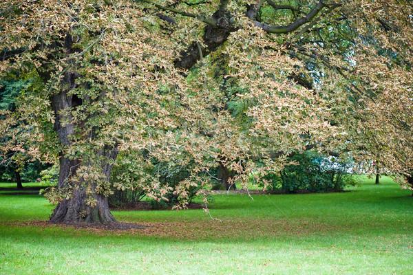 Autumn park Stock photo © timbrk