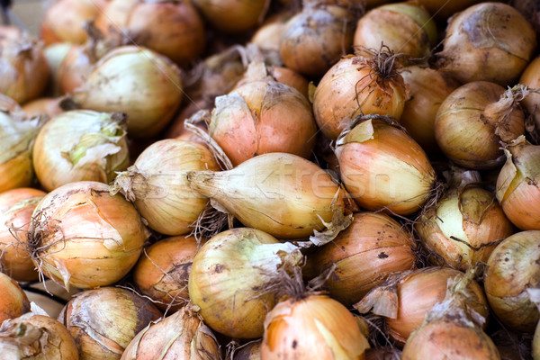 Pile of Onions Stock photo © timbrk