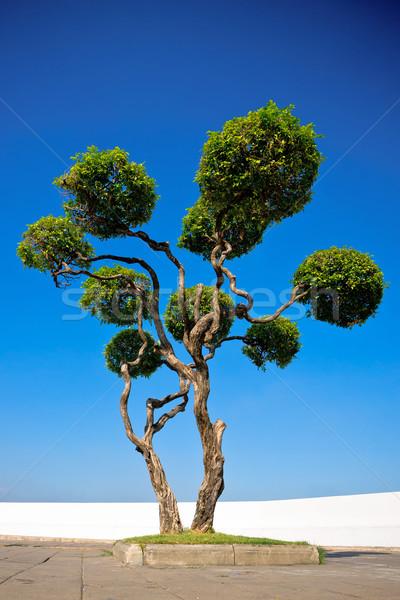 Devious tree Stock photo © timbrk