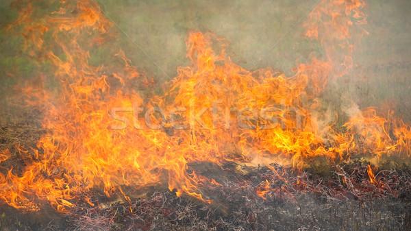 Brandend drogen gras zomer natuur aarde Stockfoto © timbrk